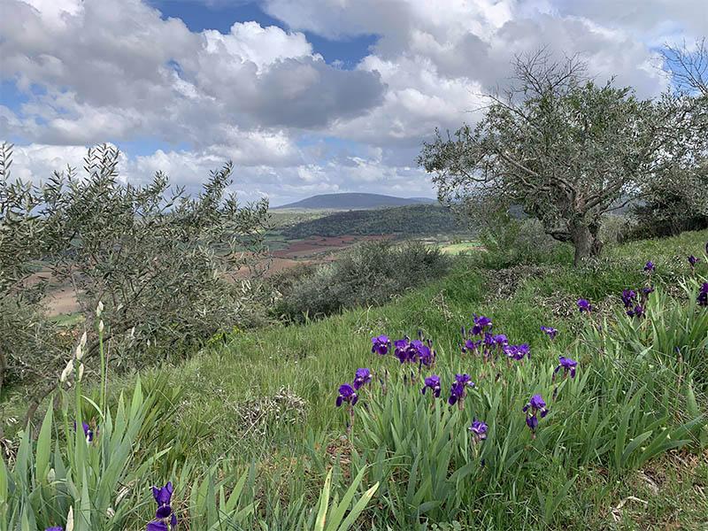 Paysage naturel Saint-Julien de Montagnier